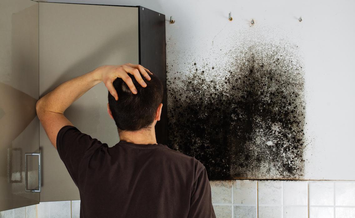 تمیزی دیوار کپک زده