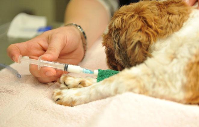 واکسن زدن راهی برای نگهداری از حیوانات