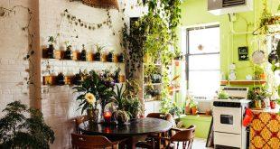 طرز نگهداری از انواع گیاهان آپارتمانی