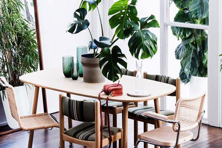 طرز نگهداری از گیاه انجیری گیاه آپارتمانی