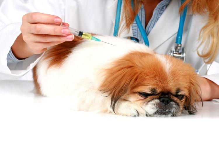 واکسن سگ و مراقبت از آن