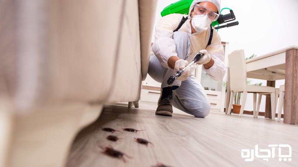 سمپاشی ساس راهی برای نابودی حشرات موذی